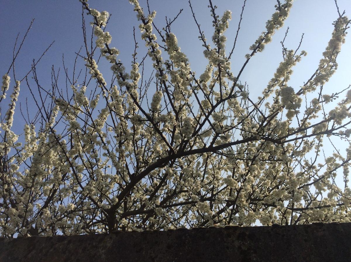 Feuilles, fleurs, branches ettroncs