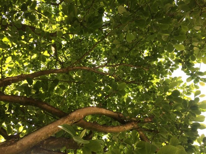 2017-05-27 15.19.01 sous le magnolia