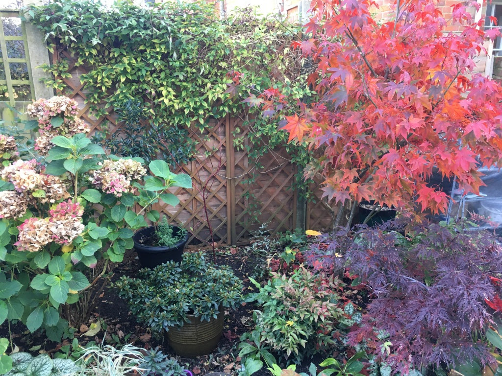 Am growing a cornus alba in the middle (not too busy !)